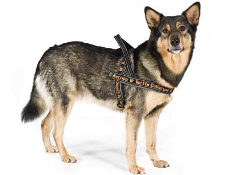 (c) www.dogscout24.eshop.t-online.de/